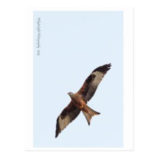 Cartão Postal Papagaio vermelho no céu