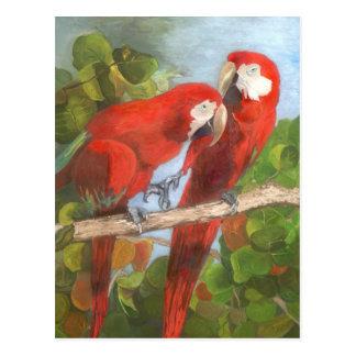 Cartão Postal Papagaios que compartilham de segredos