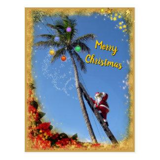 Cartão Postal Papai noel que decora a palmeira