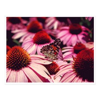 Cartão Postal Papillon