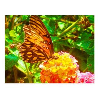 Cartão Postal Papillon (borboleta)