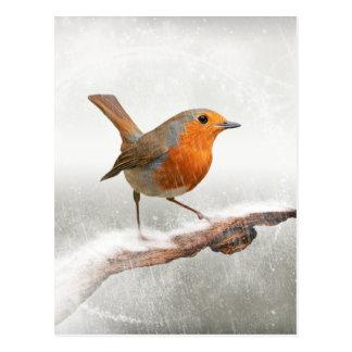 Cartão Postal Papo-roxo do inverno