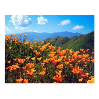 Cartão Postal Papoilas de Califórnia que cobrem um montanhês