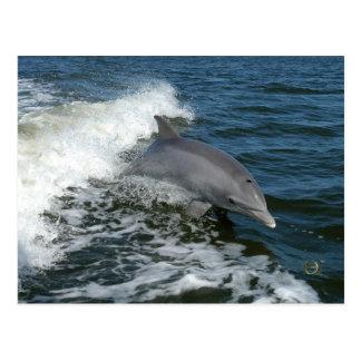 Cartão Postal Para o amor dos golfinhos