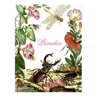 Cartão Postal Paraíso