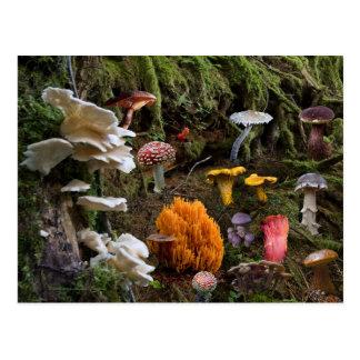 Cartão Postal Paraíso do cogumelo