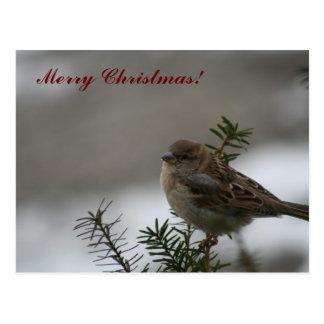 Cartão Postal Pardal do Feliz Natal!