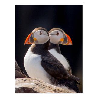 Cartão Postal Pares de papagaio-do-mar