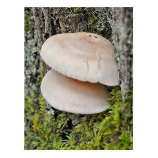 Cartão Postal Pares do cogumelo