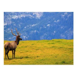 Cartão Postal Parque Colorado de Estes