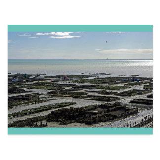 Cartão Postal Parque de ostra France de Cancale