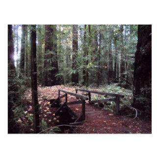 Cartão Postal Parque estadual das sequóias vermelhas de Humboldt