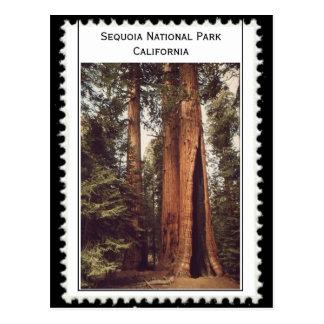 Cartão Postal Parque nacional Califórnia de sequóia
