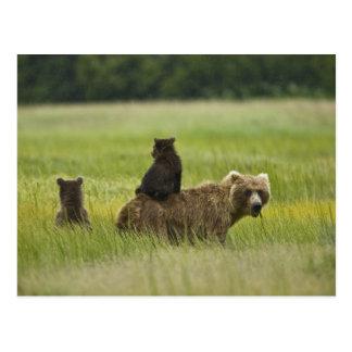 Cartão Postal Parque nacional de Clark dos EUA, Alaska, lago. A