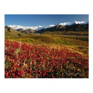 Cartão Postal Parque nacional de Denali