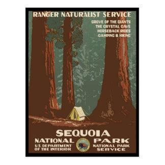 Cartão Postal Parque nacional de sequóia