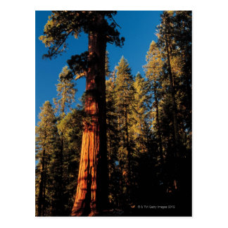 Cartão Postal Parque nacional de sequóia, Califórnia 2