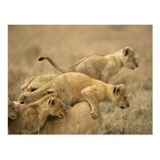 Cartão Postal Parque nacional de Serengeti, Tanzânia 2