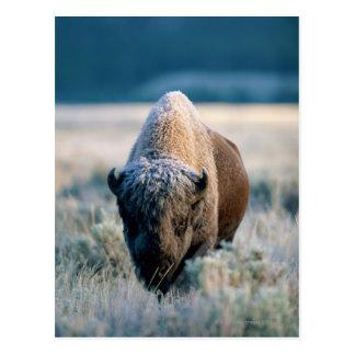Cartão Postal Parque nacional de Yellowstone, Wyoming, EUA