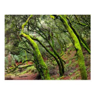 Cartão Postal Parque regional da sequóia vermelha, Califórnia