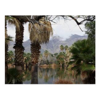 Cartão Postal Parque Tucson Az de Caliente da água