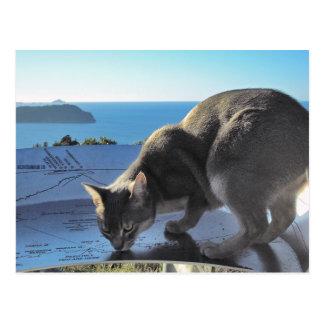 Cartão Postal Parte superior Abyssinian do gato da montagem Paku