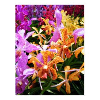 Cartão Postal Partido da orquídea