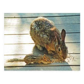 Cartão Postal Partilha do coelho e do Chipmunk