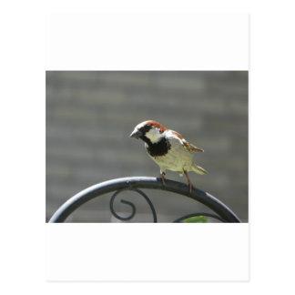 Cartão Postal passarinho