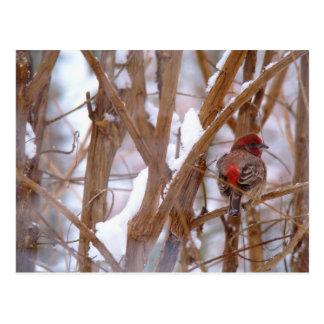 Cartão Postal Passarinho de casa na cena do inverno