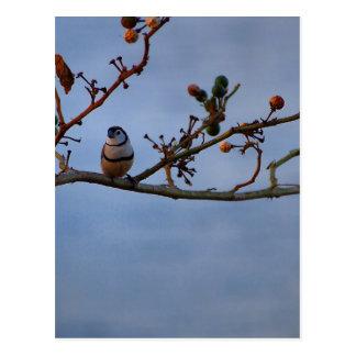Cartão Postal passarinho Dobro-barrado no ramo