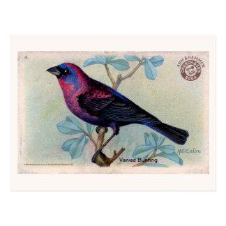 Cartão Postal Pássaro 04 do vintage