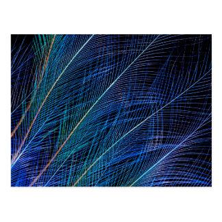 Cartão Postal Pássaro azul do abstrato da pena do paraíso