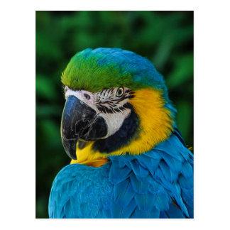 Cartão Postal Pássaro azul e amarelo
