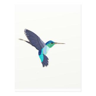 Cartão Postal Pássaro azul e verde do zumbido
