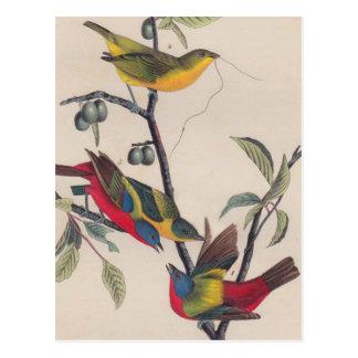 Cartão Postal Pássaro Bunting pintado Audubon antigo
