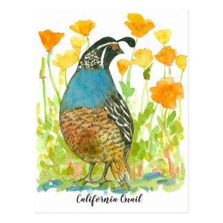 Cartão Postal Pássaro das codorniz das papoilas de Califórnia da