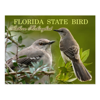 Cartão Postal Pássaro de estado de Florida - tordo dos remedos