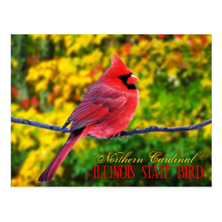 Cartão Postal Pássaro de estado de Illinois - cardeal do norte