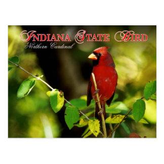 Cartão Postal Pássaro de estado de Indiana - cardeal do norte