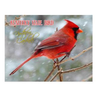 Cartão Postal Pássaro de estado de Kentucky - cardeal do norte