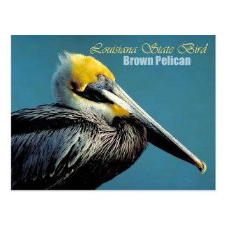 Cartão Postal Pássaro de estado de Louisiana - pelicano de Brown
