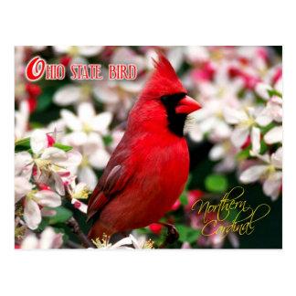 Cartão Postal Pássaro de estado de Ohio - cardeal do norte