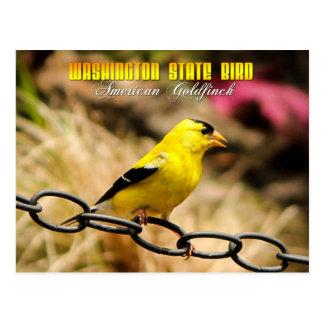 Cartão Postal Pássaro de estado de Washington - Goldfinch