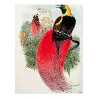 Cartão Postal Pássaro de paraíso, gravado por T. Walter