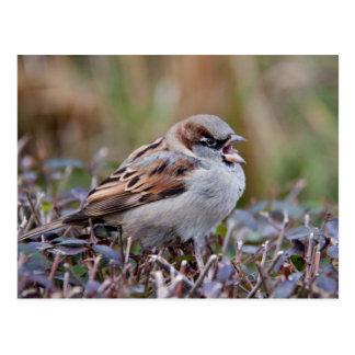 Cartão Postal Pássaro do canto
