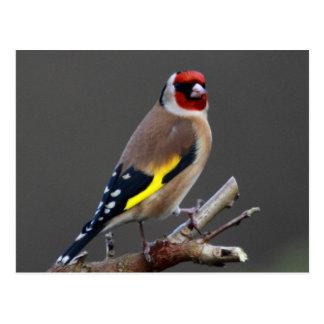 Cartão Postal Pássaro do Goldfinch