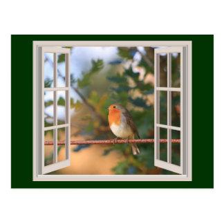 Cartão Postal Pássaro do pisco de peito vermelho na janela
