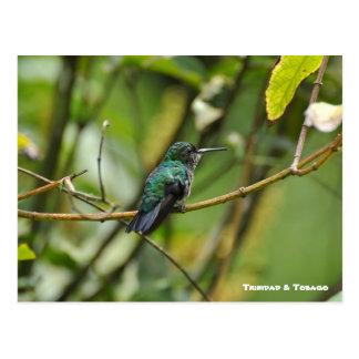 Cartão Postal Pássaro do zumbido