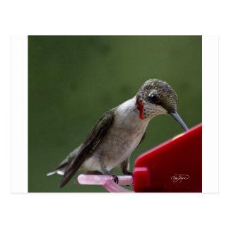 Cartão Postal Pássaro do zumbido em Geórgia